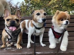 The cute gang