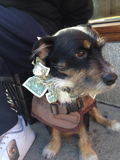 A dollar a day keeps the vet away
