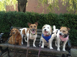 Special dog sitters in Boston