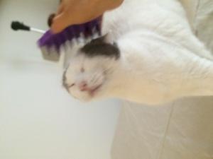 Suki spa day