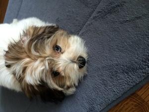 Puppy Luna