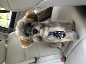 A corporate puppy