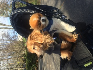 Carpool buddies