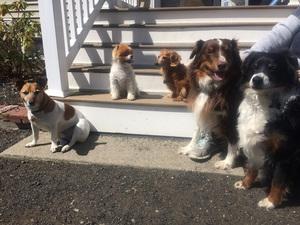 KC and the Auburn gang
